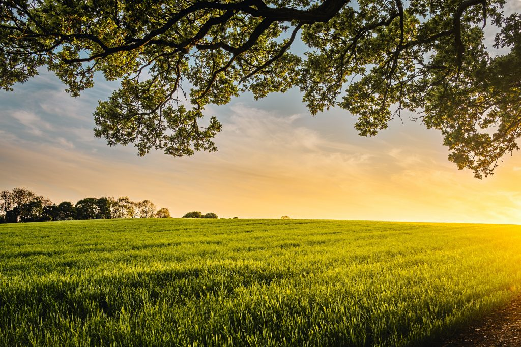 Freedom-Why You Will Love Rural Living