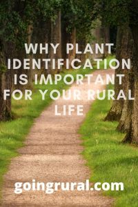 Why Plant Identification Is Important For Your Rural Life
