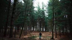 Pine Forests Are A  Great Way To Get Back To Nature