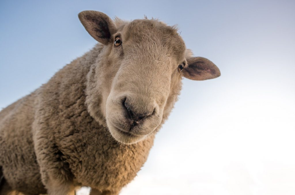 Adjusting To Rural Life: Animals Can Be Noisy And Smelly