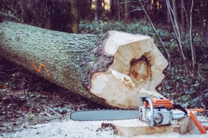Make Sure You Know How To Safely Fell A Tree You Want To Fuel Your Life Not Lose Your Life