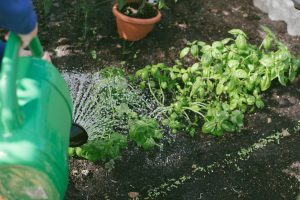 Get Fit While Gardening
