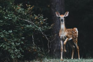 Attract More Deer With Careful Placement Of Your Feeder