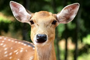 Deer Feeders Are A Great Way To Support Wildlife