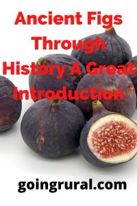 Ancient Figs Through History A Great Introduction
