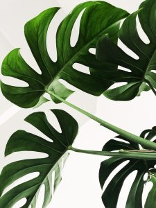 Dangers of freezing to the growth of plants
