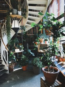 The Healthy Growth Of Plants Part II Choose A Good Spot